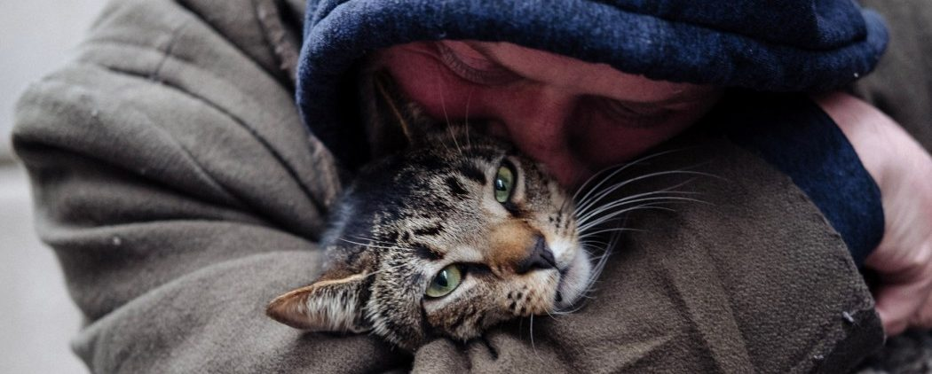 CAT DADDIES hero image
